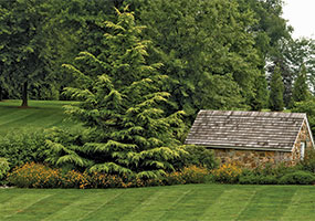 evergreen_backyard_ts-160056918-main.jpg
