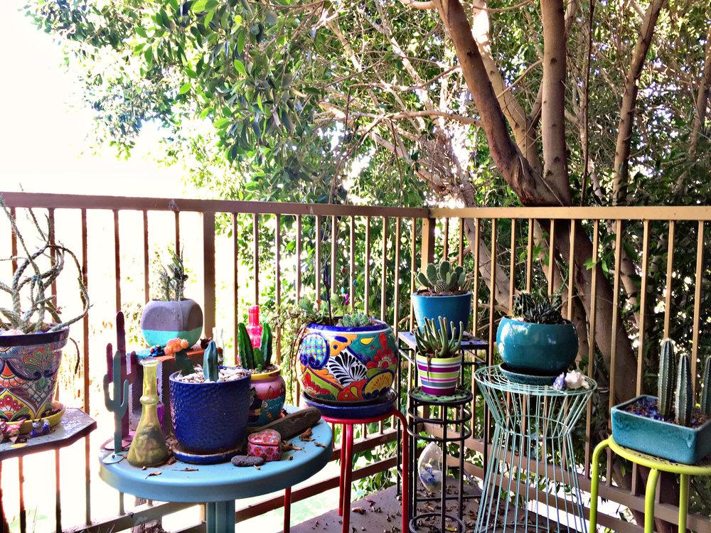 Plant Nursery Phoenix Arizona