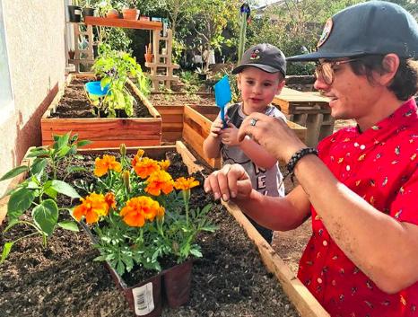 Phoenix Plant Nursery