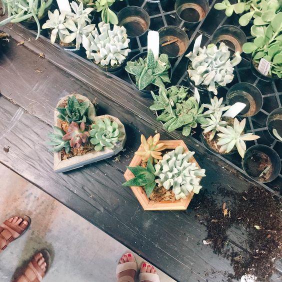 Phoenix Plant Nursery Wedding Arrangements Cacti Succulents 4.jpg