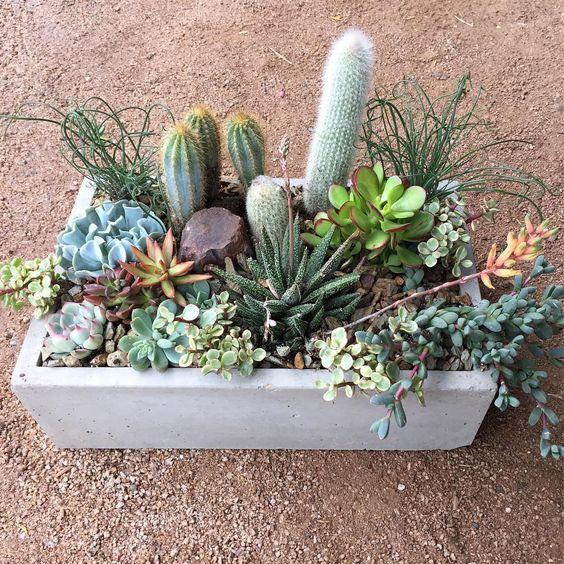 Phoenix Plant Nursery Wedding Arrangements Cacti Succulents 5.jpg