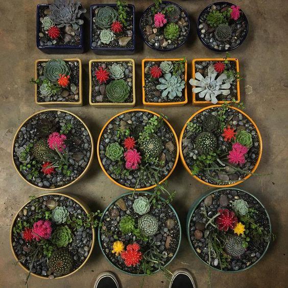 Phoenix Plant Nursery Wedding Arrangements Cacti Succulents 6.jpg