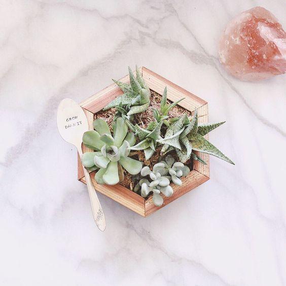Phoenix Plant Nursery Wedding Arrangements Cacti Succulents 7.jpg