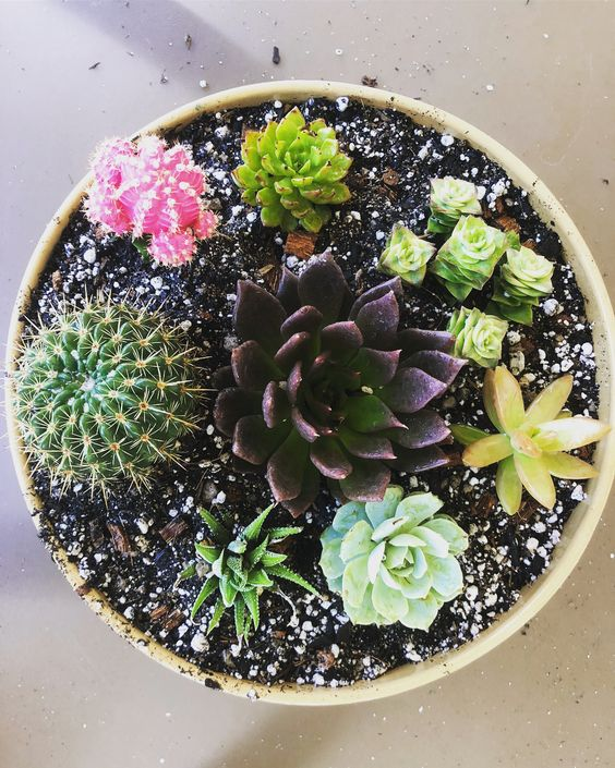 Phoenix Plant Nursery Wedding Arrangements Cacti Succulents 8.jpg