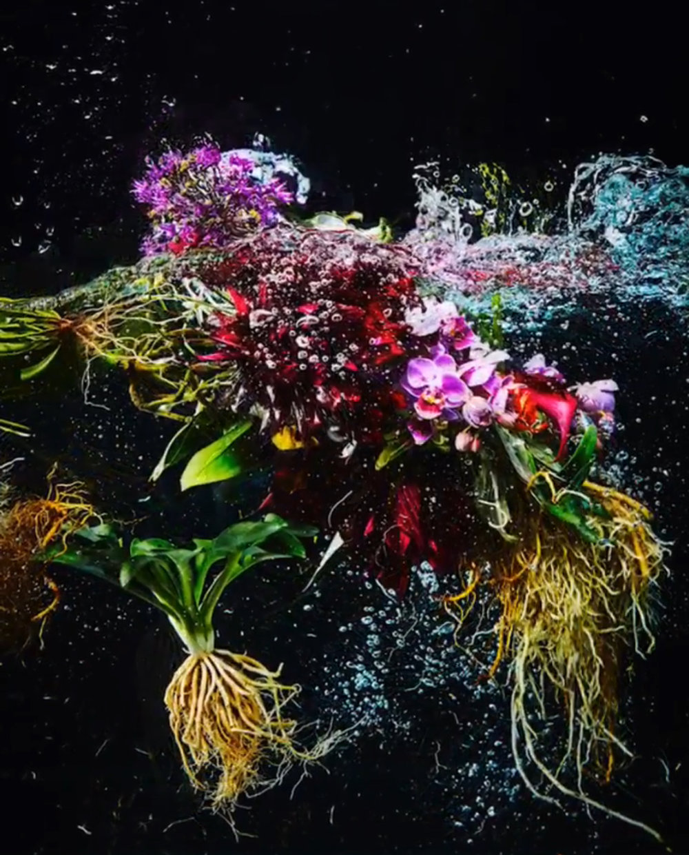 Still image from one of Azuma Makoto's spectacular flower videos.