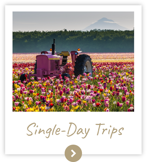 Single Day Trips