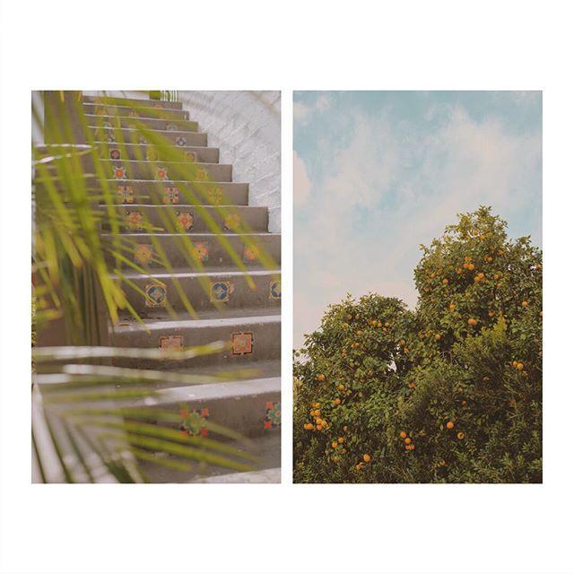 Mosaic tiles and orange trees // Palm Springs.🌿🍊🌳 #palmsprings #mytinyatlas