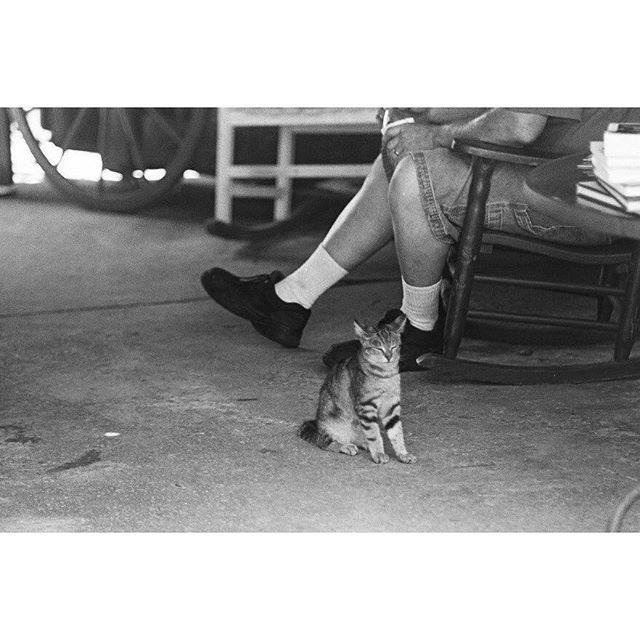 Carolina kitten.
