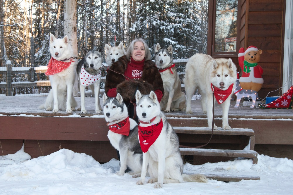 The magnificent seven and I pose for our Christmas card photo in Willow, Alaska. Top:Pearl, Maggie, Rosie, Chena and Spirit. Seated: Fritter and Nahanni. (photo credit: ©2017HuskyProductions/Teresa Firmin-Lindner)