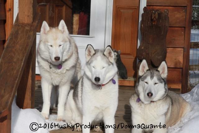 Rosie, Nahanni, Chena