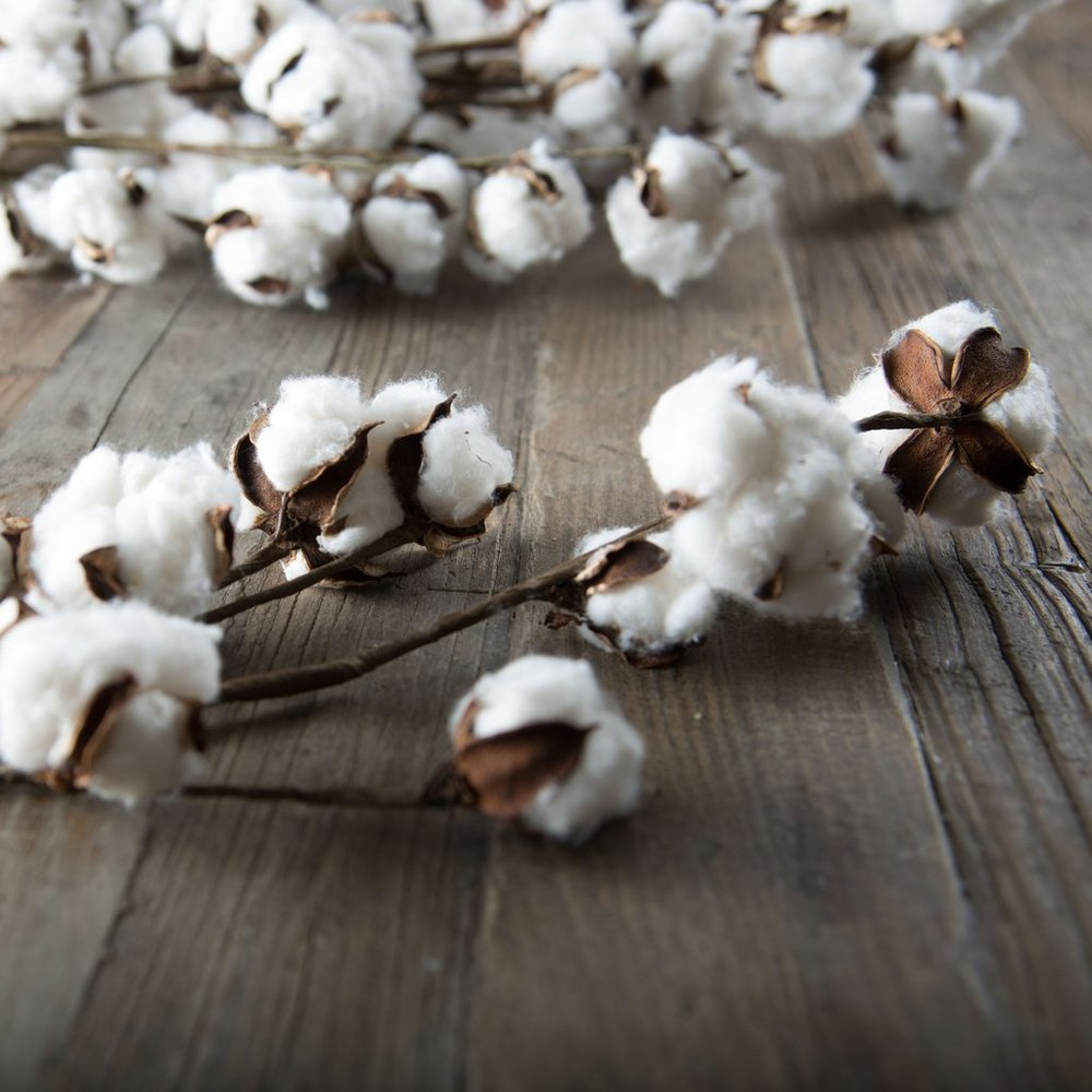 cotton stems -