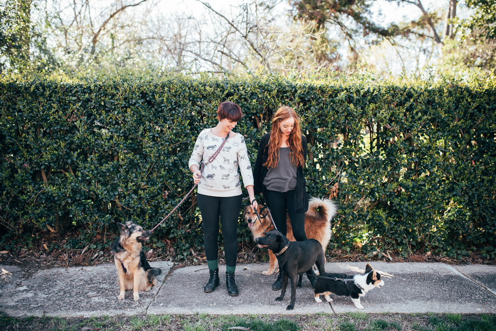 north carolina creative community - raleigh dogwalkers - raleigh dogwalking services