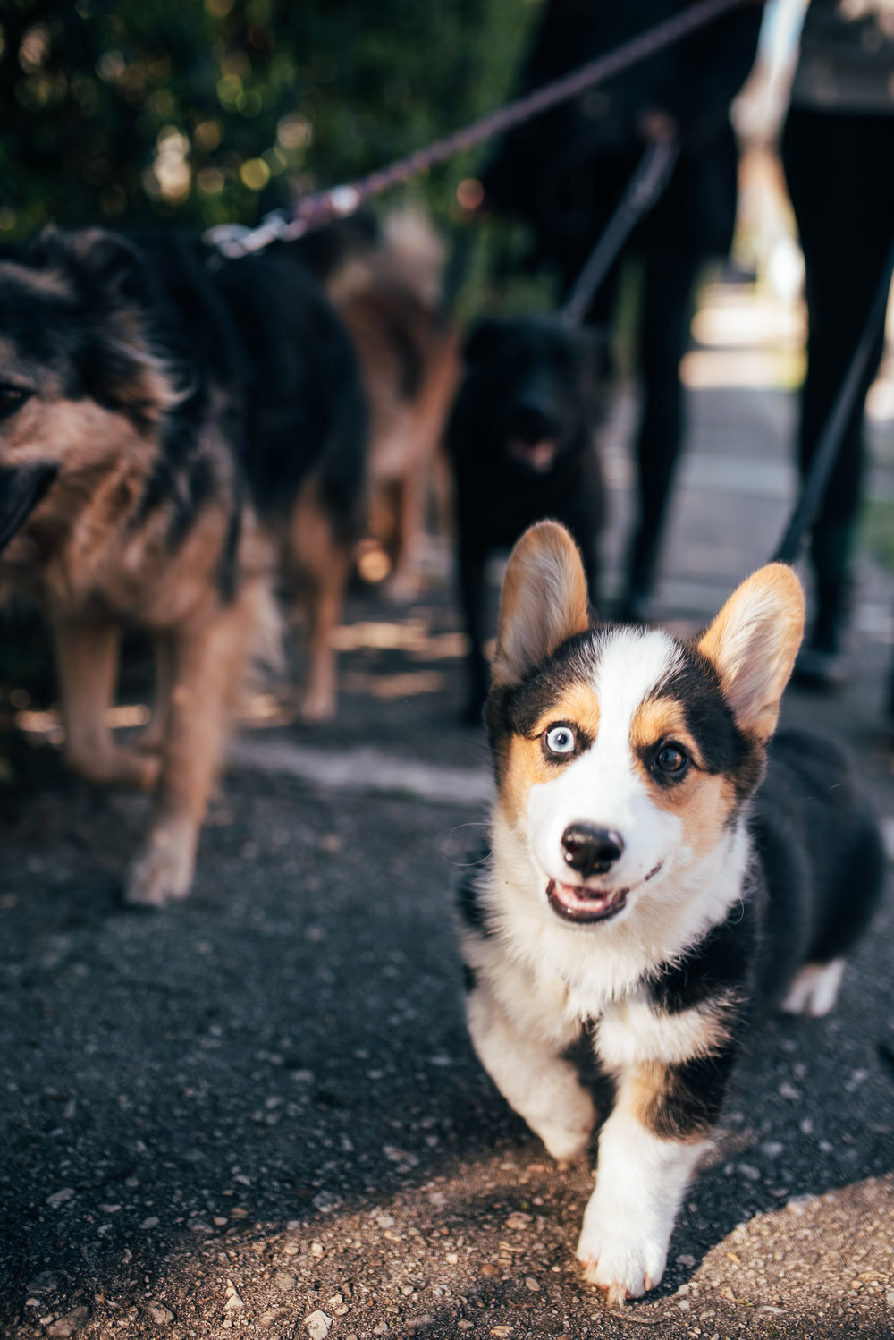 raleigh dogwalking services - raleigh dogwalkers - north carolina creative community