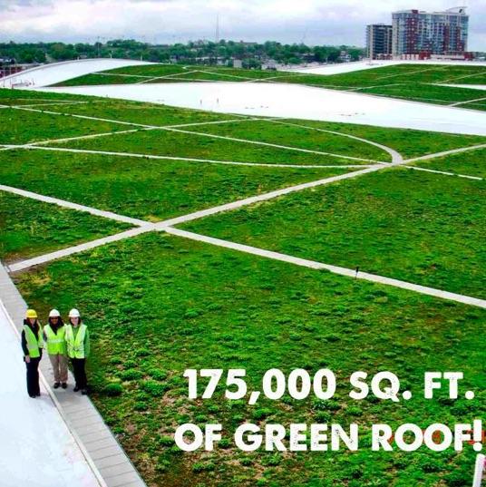 MCC Green Roof.jpg