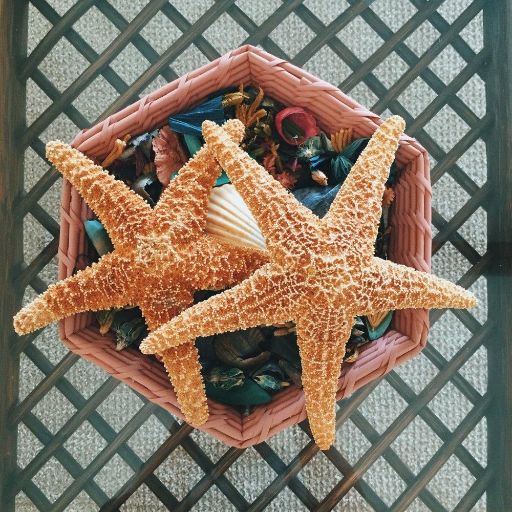 SeashellsRockportTexas.jpg
