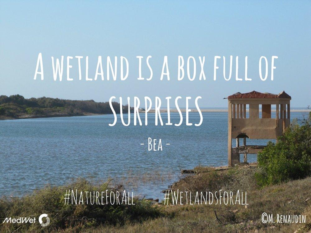 MedWet_WetlandsForAll_campaign (4).jpg
