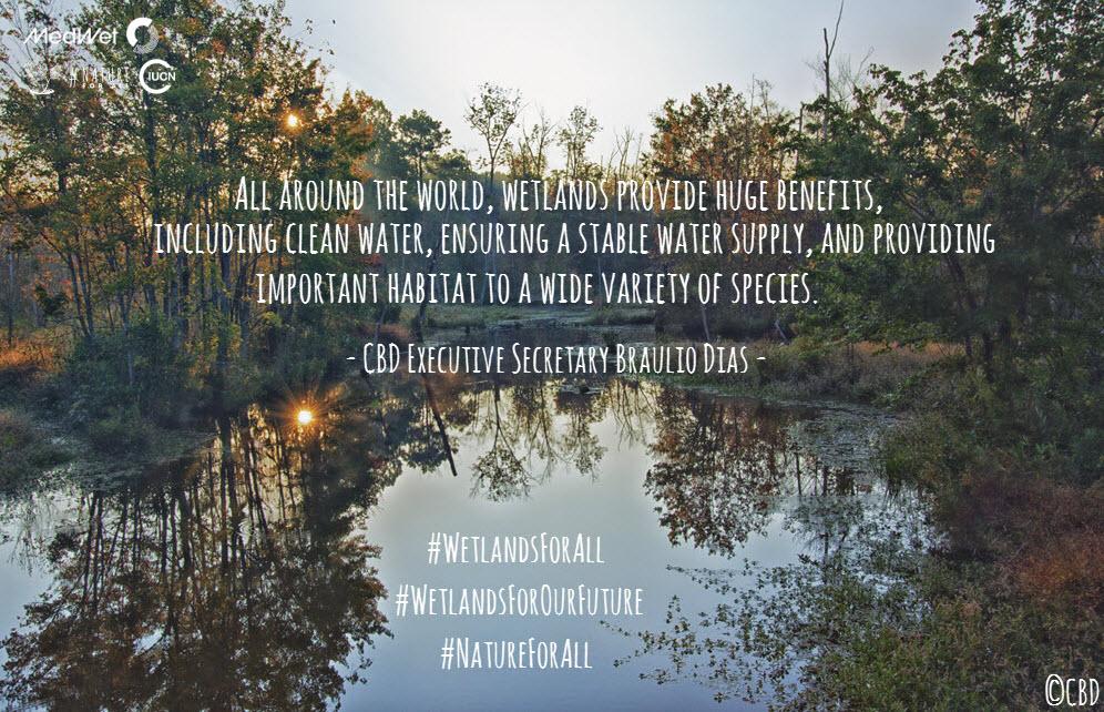 WetlandsForAll-campaign (5).jpg