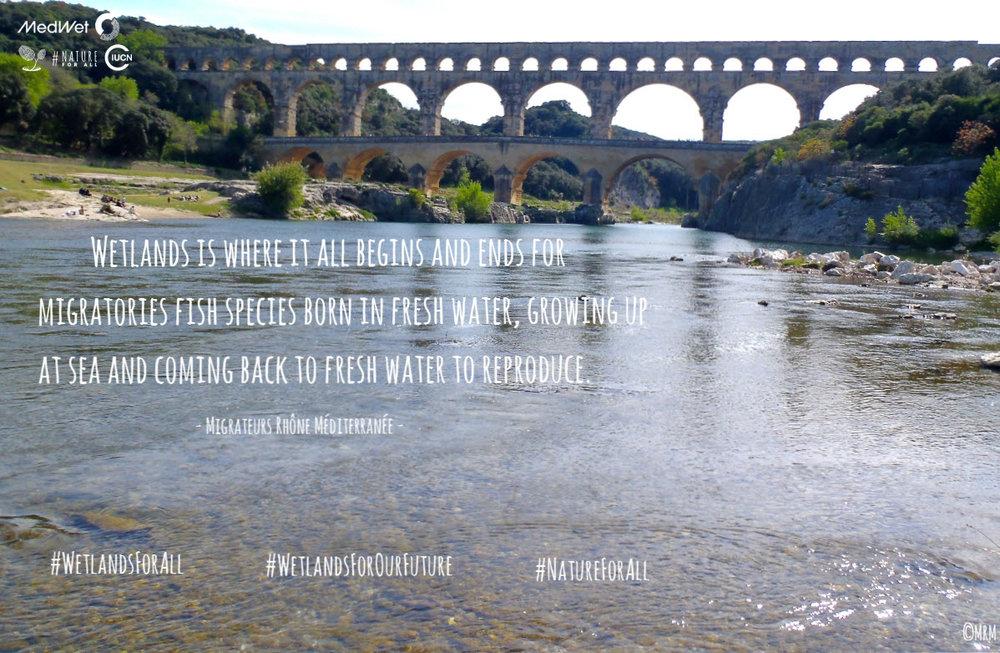 WetlandsForAll-campaign (12).jpg
