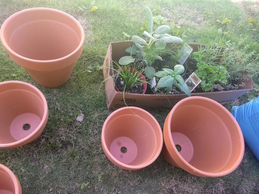 pre plant.jpg