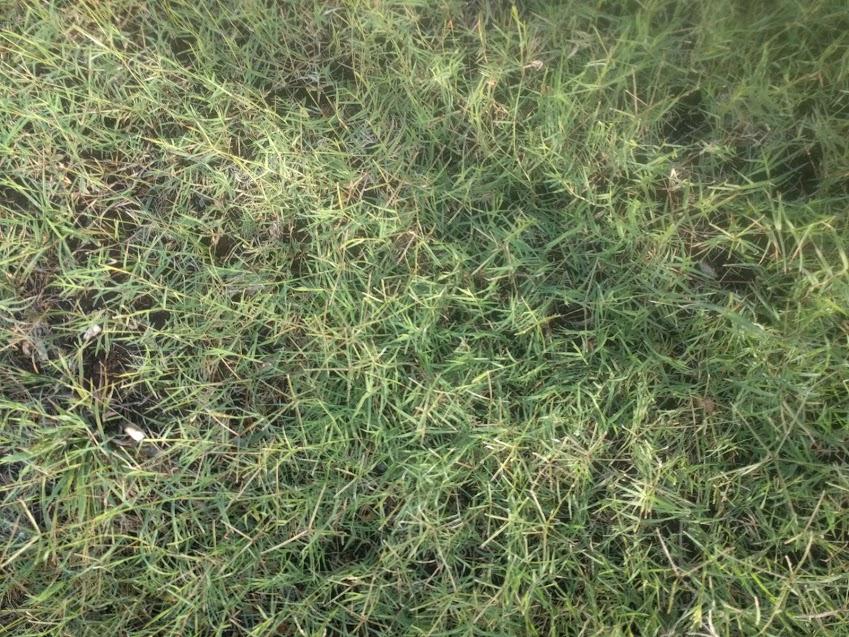 burmuda grass.jpg