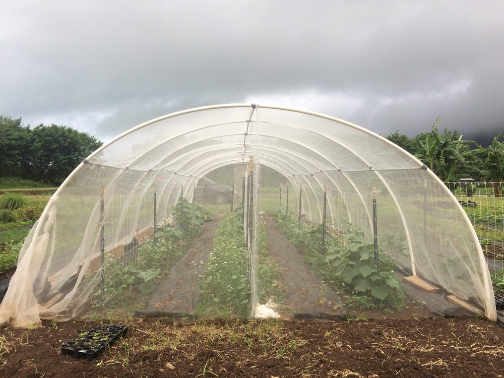 hoop house back.JPG