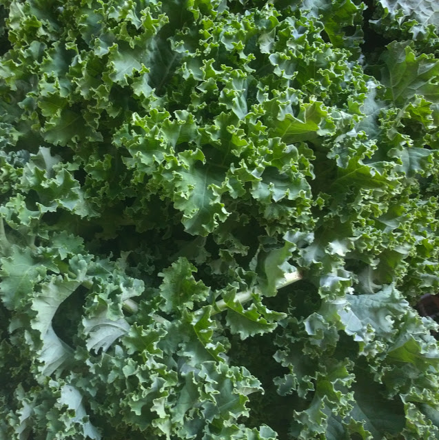 kale close up.jpg