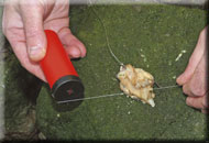 4. Secure the bait with elastic cotton