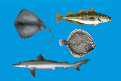 Learn about sea fish sea angler for What do fish see