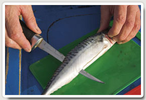 2. Cut along the flank of the mackerel moving the knife along the backbone towards the tail end to produce one side of the flapper bait