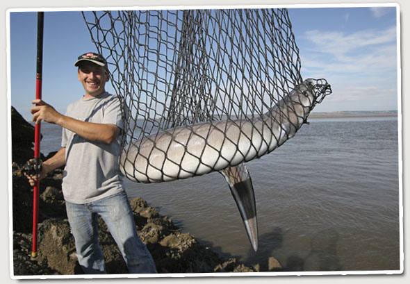 Catching conger eels from the shore — Sea Angler