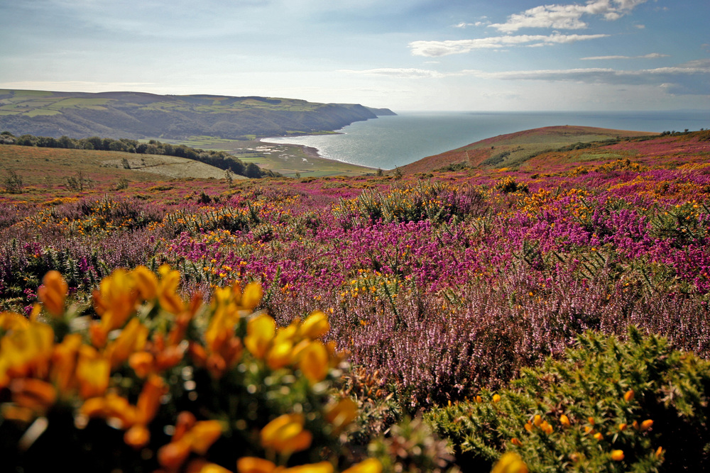 Beautiful%20Exmoor%20viewing%20the%20prolific%20Porlock%20bay%20and%20the%20Br.JPG