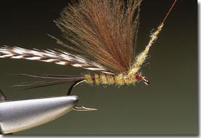 cdc-mayfly-pic-10.jpg