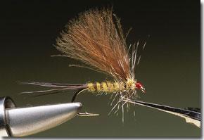 cdc-mayfly-pic-12.jpg