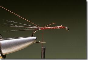 cdc-mayfly-pic-2.jpg