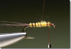 cdc-mayfly-pic-5.jpg