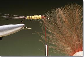 cdc-mayfly-pic-6.jpg