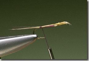 kites-imp-pic-3.jpg