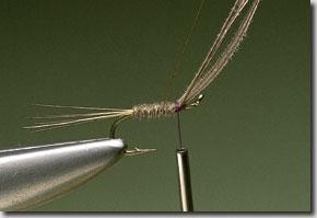 kites-imp-pic-6.jpg