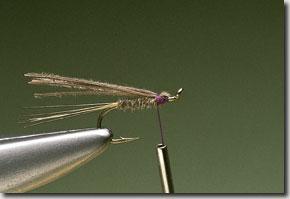 kites-imp-pic-7.jpg