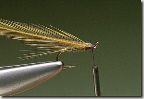 kites-imp-pic-9.jpg