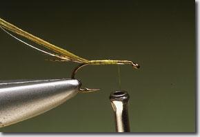 olive-pic-5.jpg
