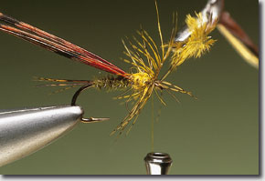 olive-pic-7.jpg