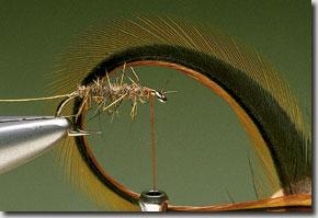 Elk-Hair-Sedge-pic-4.jpg