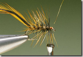 Elk-Hair-Sedge-pic-7.jpg
