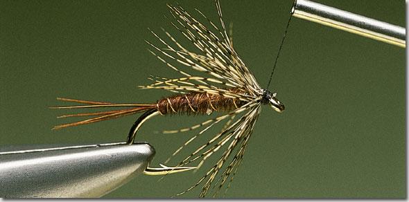 Endrick-Spider-pic-11.jpg
