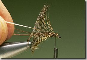 Endrick-Spider-pic-8.jpg
