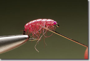 pink-shrimp-pic-12.jpg