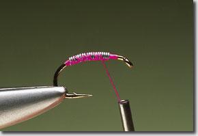 pink-shrimp-pic-2.jpg