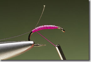 pink-shrimp-pic-3.jpg