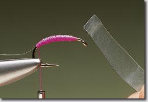 pink-shrimp-pic-4.jpg